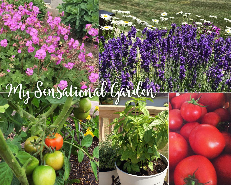 Sensational Garden